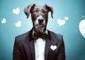 Se psem mě baví svět – nový projekt zachrání týraná a opuštěná zvířata