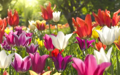 Na Jarní Floře zažijete úžasný rej masek a květů!