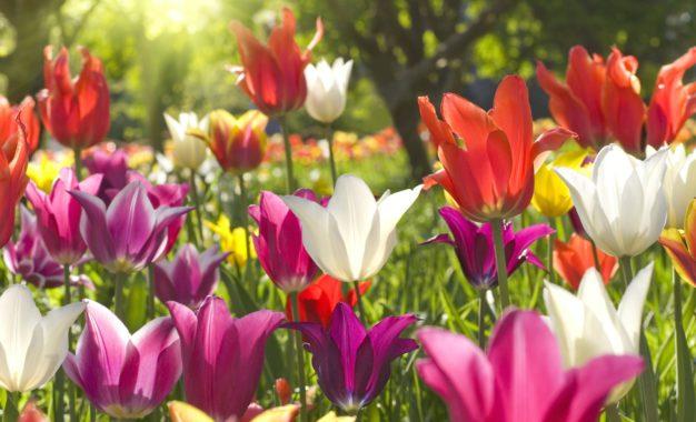 Na Jarní Floře zažijte úžasný rej masek a květů!