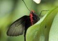 Vzneste se na křídlech motýlích v trojské botanické zahradě