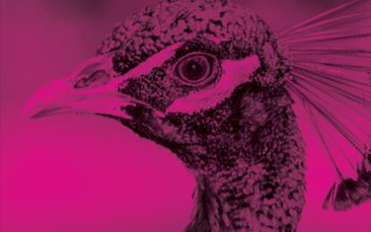 Filmový festival Opavský páv právě spustil přihlašování studentských filmů