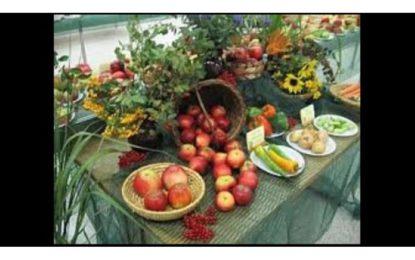 Život na zahradě – zdravý životní styl 2011